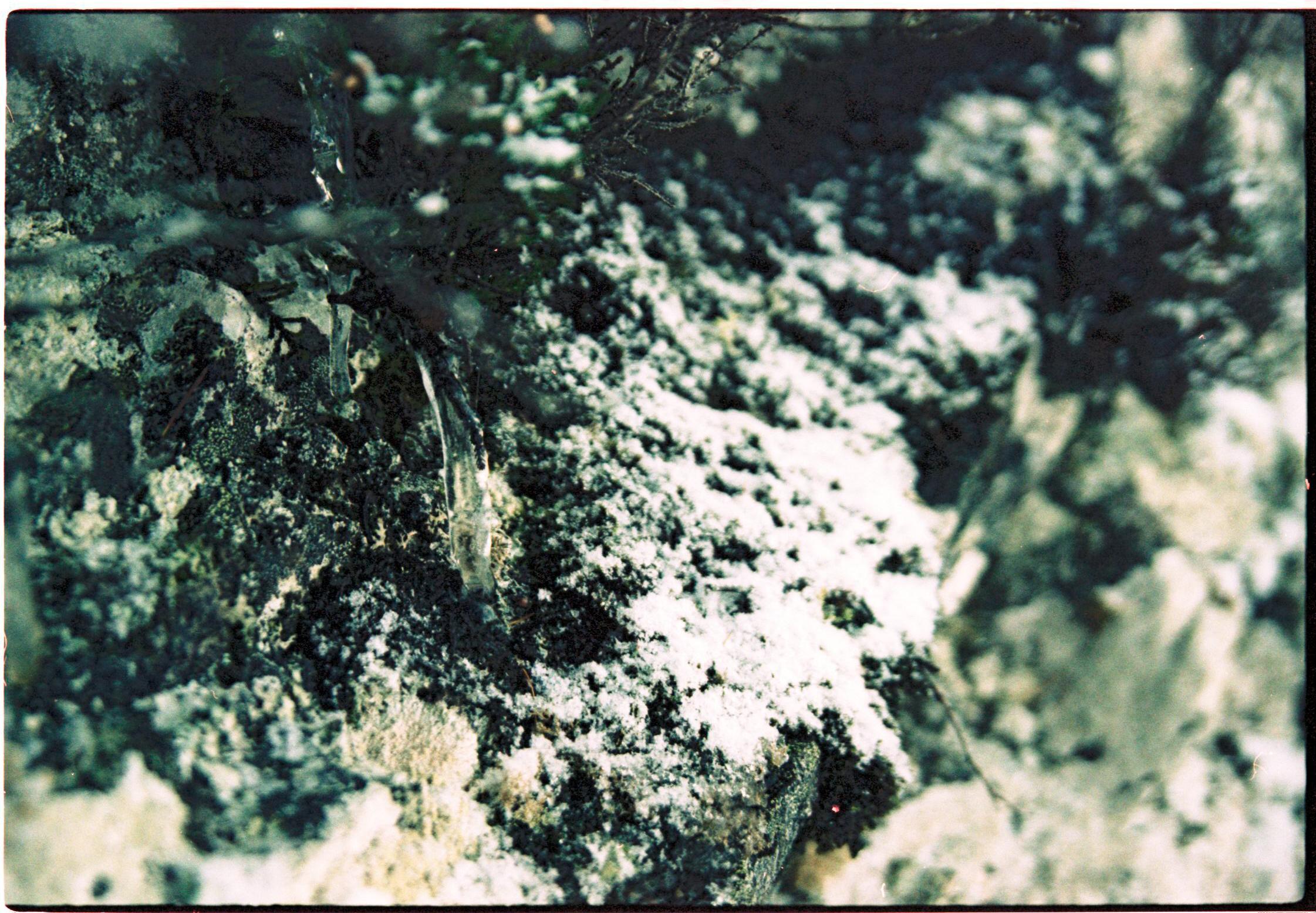 <p><strong>Inshriach 3            35 Euro</strong><br />Epsonprint on Hanhemulhe paper Photo Rag 110 gr.<br/>21 x 14,8 cm</p>